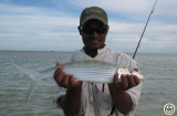 IMG_0859 Another Kiritimati bonefish.jpg