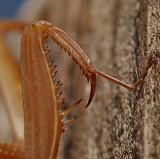Praying mantis 3291