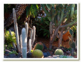 Early Morning Cactus Garden.jpg