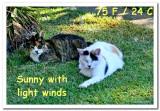 Cat Weather:Suzie&Bunny.jpg