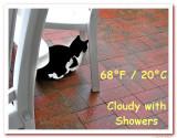 Cat Weather:Blackie Rain.jpg