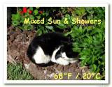 Cat Weather:Blackie Sun.jpg