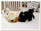 Cool Cats.jpg