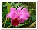 Pink Orchids.jpg