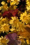 Yellow Mums 2