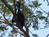 we saw monkeys too