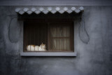 Hutong Cat