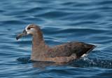 Albatrosses, petrels, shearwaters