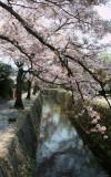 Philosopher's Way, Kyoto