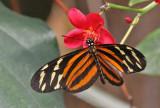 Butterflies, dragonflies, and moths