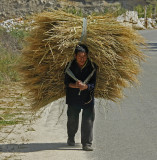 Carrying Rice Paro