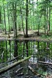 IMG_4910-1.1 Forêt de ville - Otterburn Park - Québec