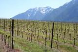 Vallée de l'Okanagan - vignobles à flancs de Rocheuses