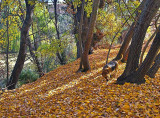 Clarendon Autumn_2