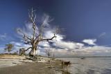 Banks of Lake Bonney