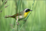 Warblers and the Birds of Summer