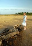 Elephant Remains Kaudulla N.P. Sri Lanka