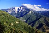 SequoiaEntr-35mm-2-PS.jpg