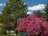 Spring '07 Calgary
