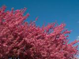 Pink & Blue - Spring