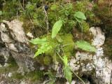 Helechos y otras hierbas