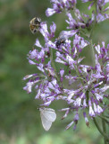 Flores silvestres, mariposa y abeja