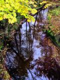 Mr. Autumn's rustic mirror