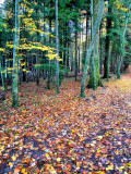 Mr. Autumn's carpet....