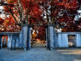 An open gate over Autumn...
