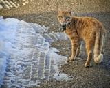 Snowcat....