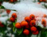 Merry berries...