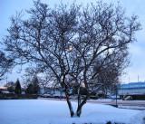 Shivering tree...