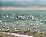 Winter flight....