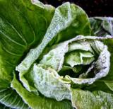 Frozen vegetables' department 2