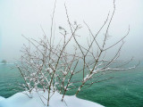 Ethereal charm of winter....