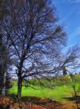 Late spring tree...