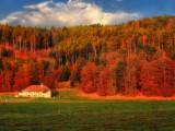 The golden light of late autumn morning...