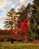It's nearly november on Jura Mountains...