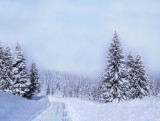 Winter charm....