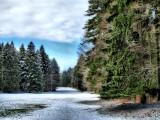 The solitude of pastureland