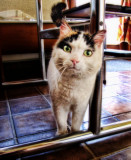 Curiosity Kills the Cat....
