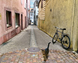A quiet alley can lead you anywhere....