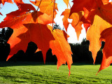 Canopy Aflame