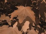 Leaf Blush