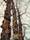 Treesury