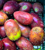 Prickly Pears Red