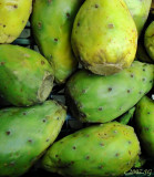 Prickly Pears Green