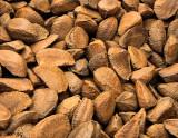 Viva Brazil Nuts!