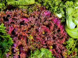 Red Cabbage and Green