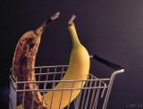 Predatory Banana